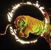 Цирки в Пестрецах