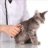 Ветеринарные клиники в Пестрецах